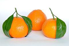 240px-Mandarin_Oranges_(Citrus_Reticulata)